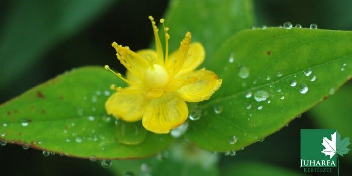 Télizöld növények
