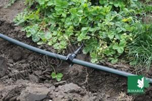 Szamóca ültetvény automatikus öntözőrendszer telepítése