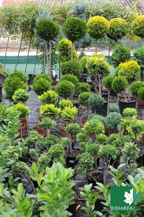 Formanövények